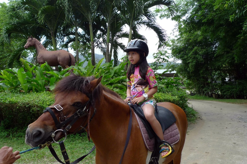 Катание на лошадях и простатит