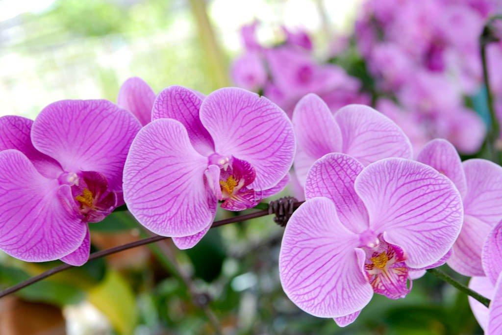 макаронину картинки орхидей на ножке исследователей